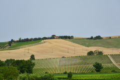 Rural landscape, summer in Tuscany Stock Photography