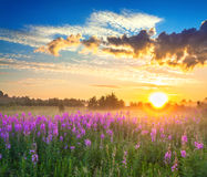 Rural landscape with sunrise  and  blossoming meadow Royalty Free Stock Photos
