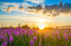 Rural landscape with sunrise  and  blossoming meadow Stock Photo
