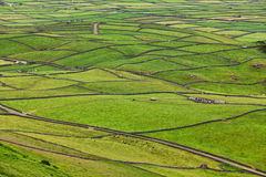 Rural Landscape, Terceira Island, Azores Royalty Free Stock Photography