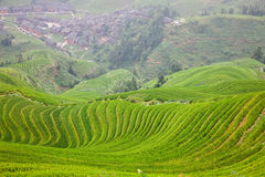 Rural landscape of  terraces Royalty Free Stock Photo