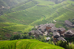 Rural landscape of  terraces. In China Royalty Free Stock Photos