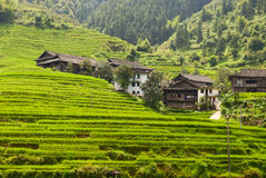 Rural landscape of terraces. In China royalty free stock image