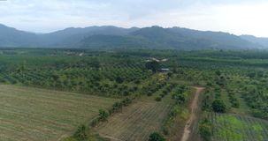 Rural landscape. Thailand.  Aerial. Top view of a field. On the horizon the mountains are covered with forest.     Thailand.  Aerial stock video footage