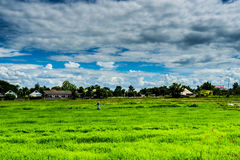 Rural landscape . Thailand . Scarecrow standing alone . Stock Photo