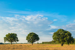 Rural landscape. With three trees in the field Stock Image