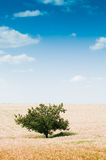 Rural landscape with tree Royalty Free Stock Photo