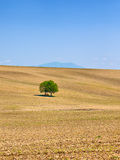 Rural Landscape with tree Royalty Free Stock Images