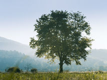 Rural landscape with tree Royalty Free Stock Photography