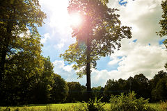Rural landscape, tree in back light Royalty Free Stock Photos