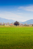 Rural Landscape With Tree And Mountains Royalty Free Stock Photography