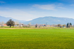Rural Landscape With Trees And Mountains Stock Image