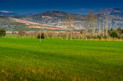 Rural Landscape With Trees And Mountains Royalty Free Stock Images