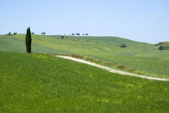 Rural landscape in Tuscany Stock Photo