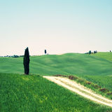 Rural landscape in Tuscany Stock Image