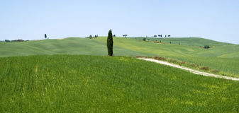 Rural landscape in Tuscany Royalty Free Stock Photo