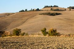 The rural landscape of the  Tuscany. Italy Royalty Free Stock Photo