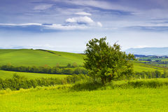 Rural landscape of Tuscany with a lone tree. Italy Stock Photography