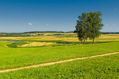 Rural landscape with two trees Royalty Free Stock Images
