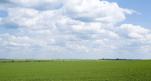 Rural landscape in Ukraine Stock Images
