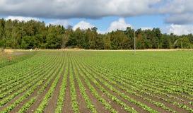 Rural landscape. Vegetable cultivation. In Finland Stock Images