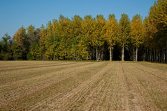 Rural landscape of the Veneto, Italy. Rows of trees of the Venetian countryside Stock Photo