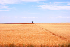 Rural landscape view background. In the  spanish province of Castilla e Leon,agriculture is the strongest activity,with undred miles of fields Stock Photography