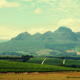 Rural landscape with vineyard(South Africa) Royalty Free Stock Photography