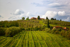 Rural landscape with vineyards Stock Photography
