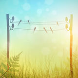 Rural Landscape. Vintage Rural Landscape Meadow With Swallows Royalty Free Stock Image