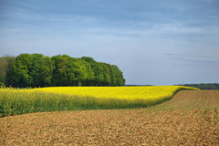 Rural landscape in Wallonia. Belgium Royalty Free Stock Photos