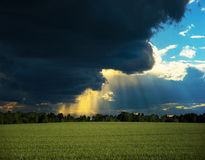 Rural landscape with wheat field and dramatic sky Royalty Free Stock Photography