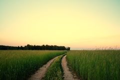 Rural landscape with wheat field on sunset Stock Images