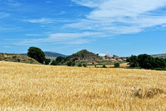 Rural landscape with wheat fields Royalty Free Stock Photos