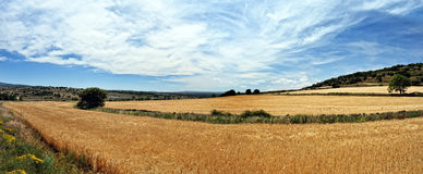 Rural landscape with wheat fields and mountains Royalty Free Stock Images