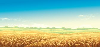 Rural landscape with wheat fields. And green hills on background. Vector illustration royalty free illustration