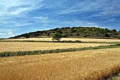 Rural landscape with wheat fields in Spain. Stock Images