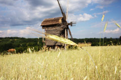 Rural landscape with a wheat germ and a windmill Royalty Free Stock Photography