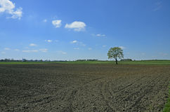 Rural landscape wih the fields. A tree in the fields prepared for cultivation Stock Photos