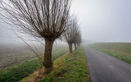 Rural landscape with willow trees on a misty morning Royalty Free Stock Images