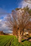 Rural landscape with willows during autumn. In Poland royalty free stock photo
