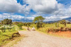 Rural landscape with wind farm at the background in Costa Rica n Stock Images