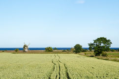 Rural landscape with windmill and corn field Royalty Free Stock Photo