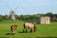 Rural landscape with windmill and horses. Royalty Free Stock Image