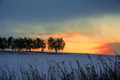 RURAL LANDSCAPE WINTER.Between Apulia and Basilicata.Sunrise: olive grove snowy. -ITALY- Stock Photography