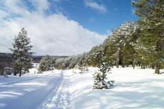 Rural landscape in winter. With expensive on snow in thick wood Stock Images
