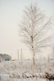 Rural landscape in winter Royalty Free Stock Photos