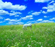 Rural Landscape With Field Of Flowers And Horse Royalty Free Stock Images