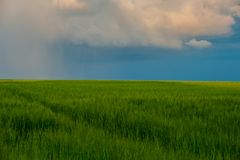 Rural Landscape With Rain Clouds On A Blue Sky In A Field. Even Royalty Free Stock Image