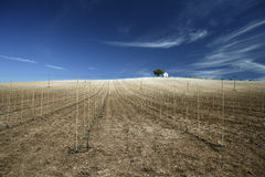 Rural Landscape With Vineyards Stock Photos